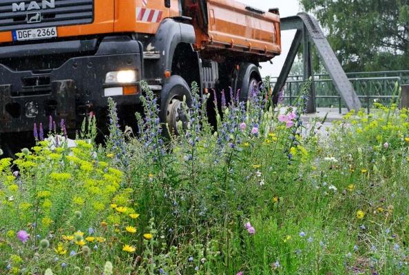 Der Kreisverkehr in Landau wird jedes Jahr bunter und schöner, hier im Jahr 2020