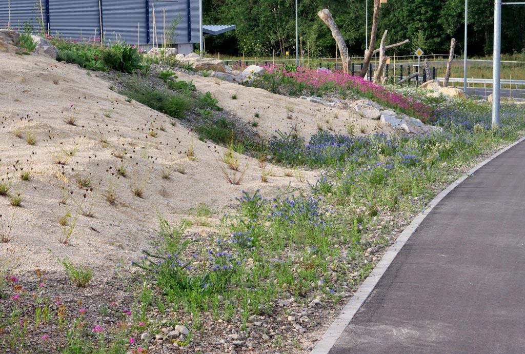 Drei Monate später fängt es zaghaft an zu blumen mit blauem Natternkopf und rosa Nelkenleimkraut. Aber viele Sandflächen sind auch noch kahl.