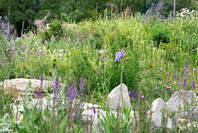 Zwischen, vor und hinter dem Steinriegel blüht es wie wild, vorne zum Beispiel violettes Purpurleinkraut neben hellblauen Schwertlilien.