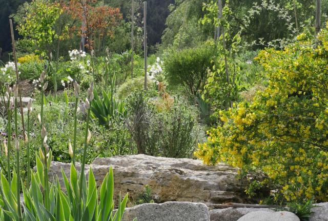 Überblick über die Fläche: Das Gelände sieht nun aus, als sei es schon immer so gewesen: artenreich, vielfältig, lebendig und voller Wildblumen