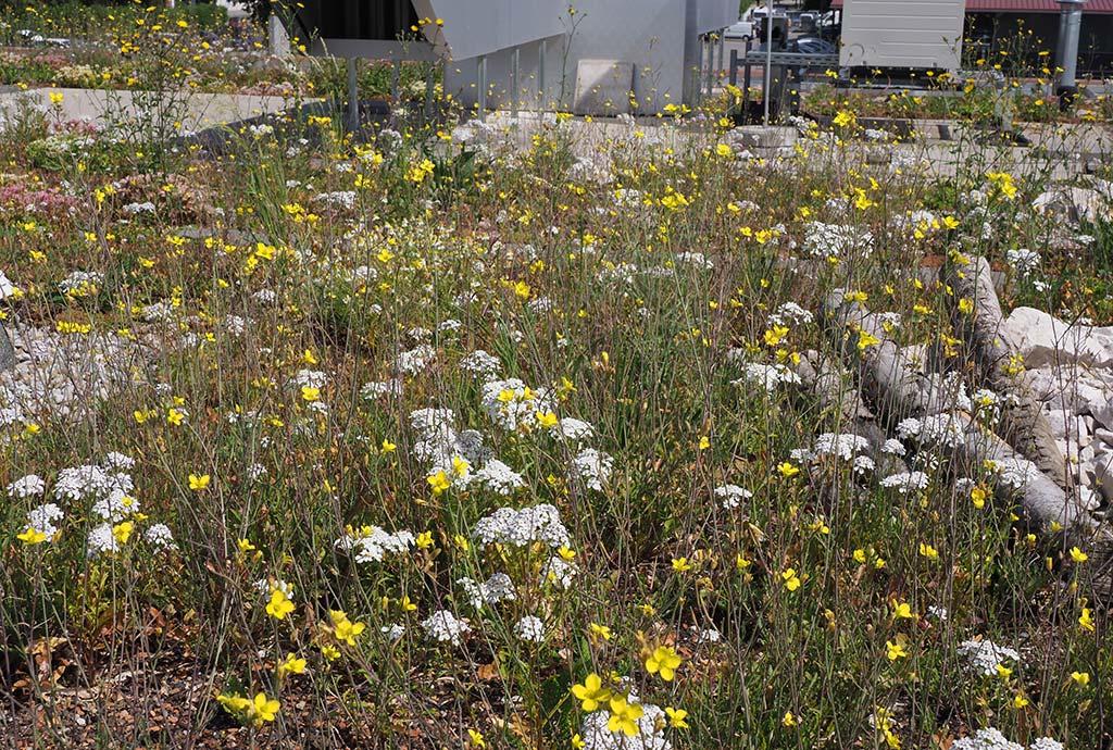 Jede Teilfläche hat eine eigene artenreiche Wildpflanzen-Ansaatmischung bekommen