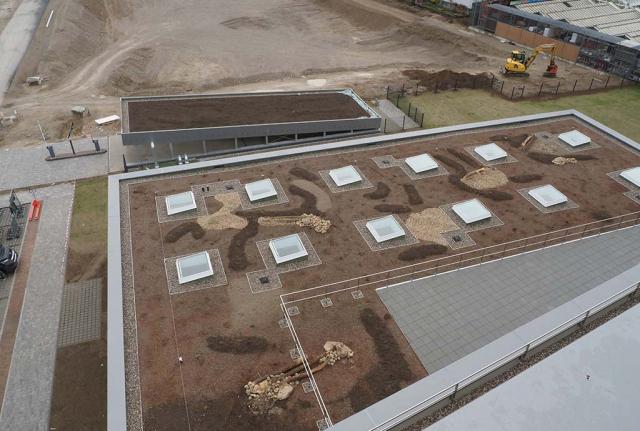Blick auf neu angelegte Dachflächen. Diese Art von Biodiversitätsdach sucht neue Flächen. Im Herbst 2020 haben wir mehrere Gebäude in Augsburg begrünen können. Neuanlagen wie hier bei Infineon und Altdächer. Es bleibt spannend