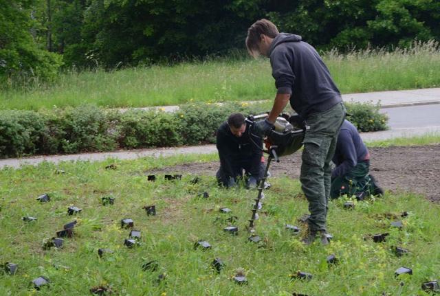 Erdbohrer bohrt für die Wildstauden Löcher in den Rasen. Bei solchen Mengen ist technisches Gerät hilfreich