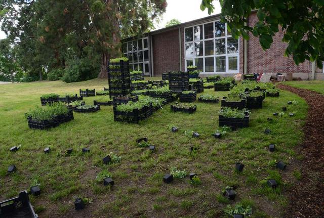 Tausende Wildstauden werden auf die Rasenfläche gelegt