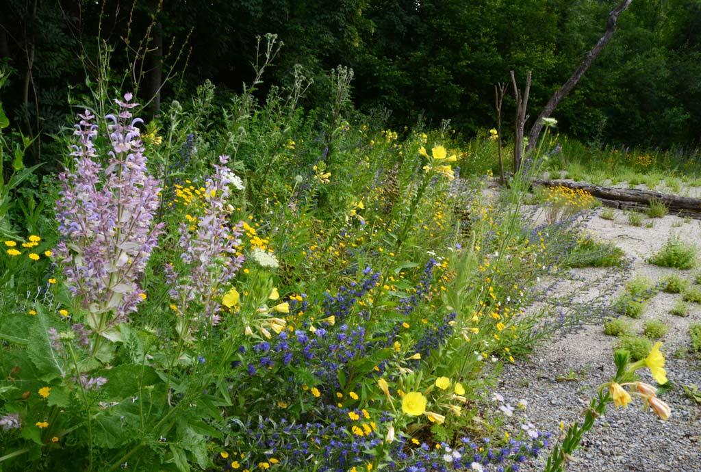 Am Rand des Geländes wurden drei verschiedene Wildblumen-Saummischungen gesät. Es blühen Muskatellersalbei in Rosa, Nachtkerzen in Gelb und Natternkopf in Blau