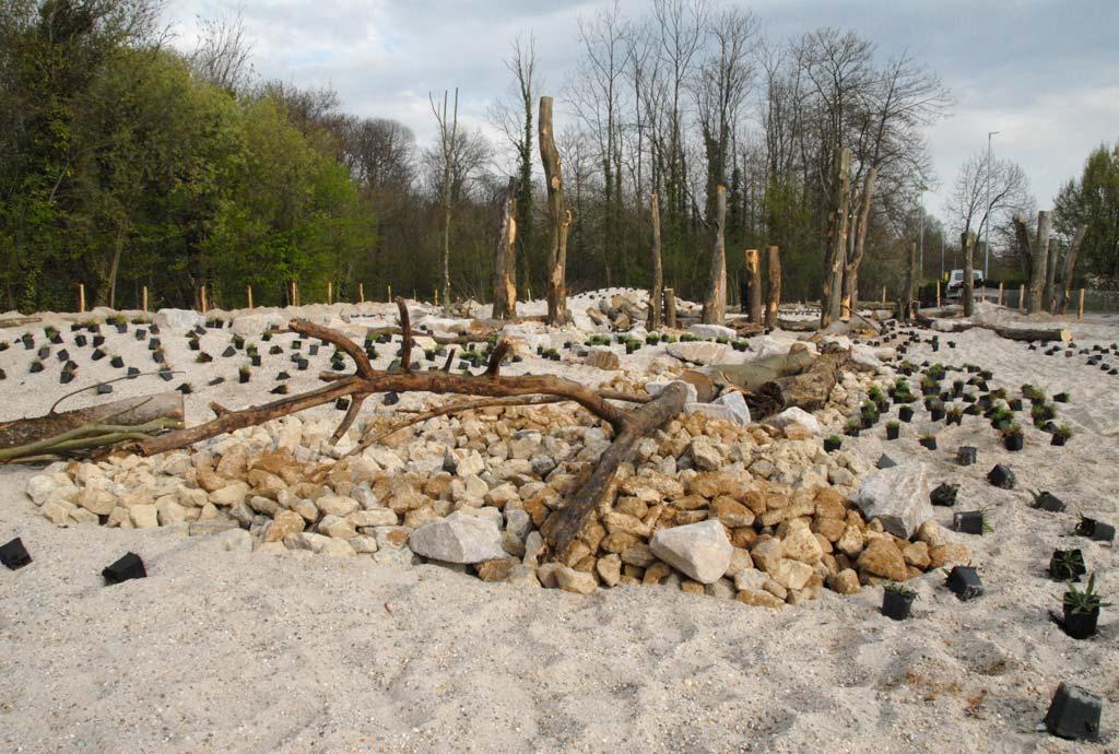 Überblick über modelliertes und strukturiertes Gelände mit verschiedenen Substraten wie Sand, Kies, Schotter, Kalkschroppen und Totholz. Punktuell liegen Wildpflanzen in Töpfen herum zum Einpflanzen.