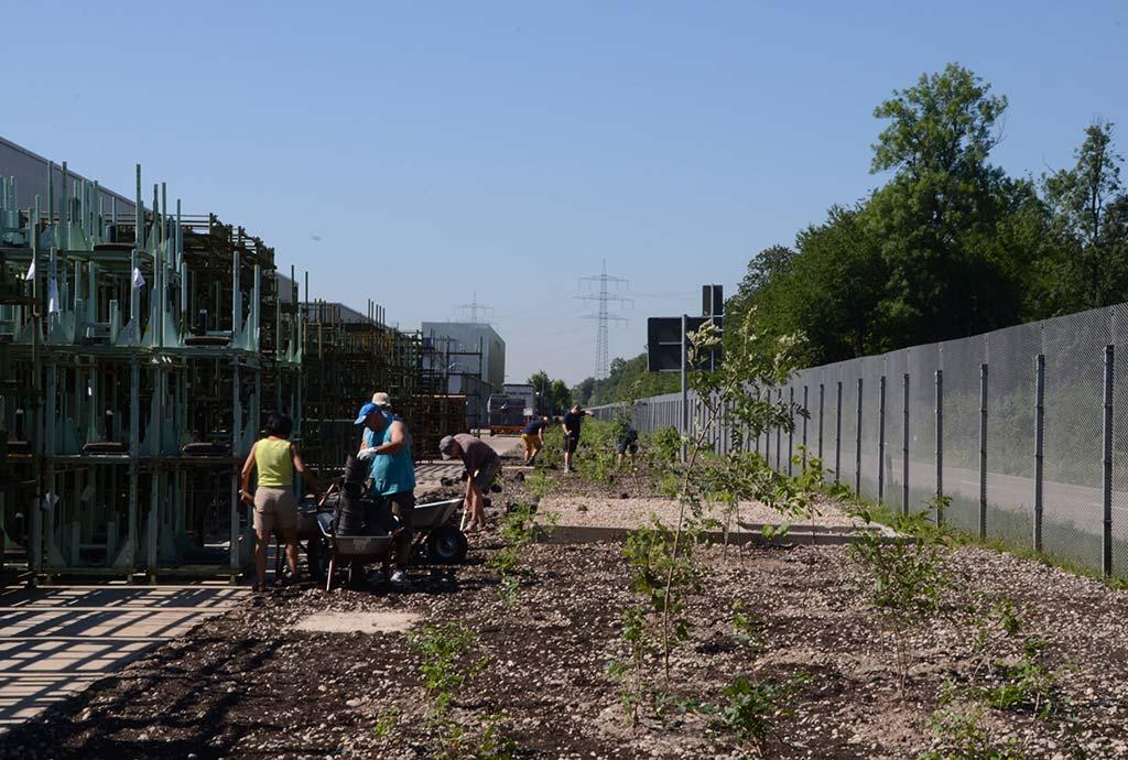 Bepflanzung: Das Gelände ist jetzt eben modelliert und besteht aus unkrautfreiem Kies. Die Hecke steht schon, die Wildstauden werden gepflanzt