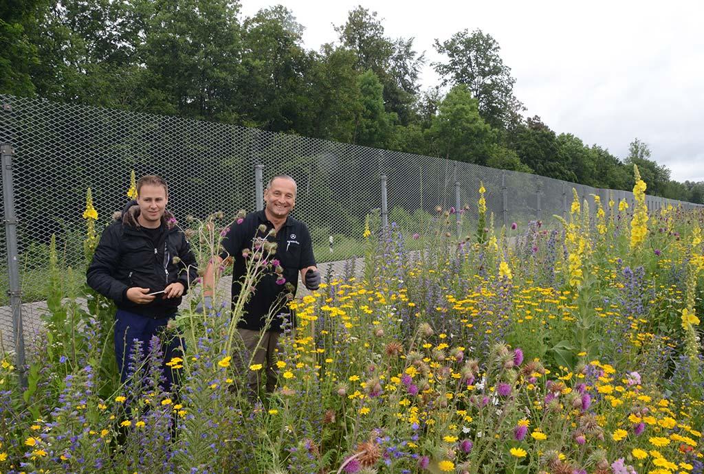 Zwei Männer inmitten von Blumen. Und immer noch läuft die betreute Pflege mit der Mannschaft von Daimler weiter. Obwohl man vor Blumen kaum noch ein Unkraut sieht