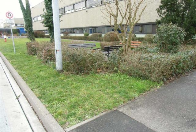Eine vieler weiteren Flächen vorher: Grüner Rasen ist zu sehen. Und das wird eine Magerwiese, also alles Gras mus abgezogen werden.