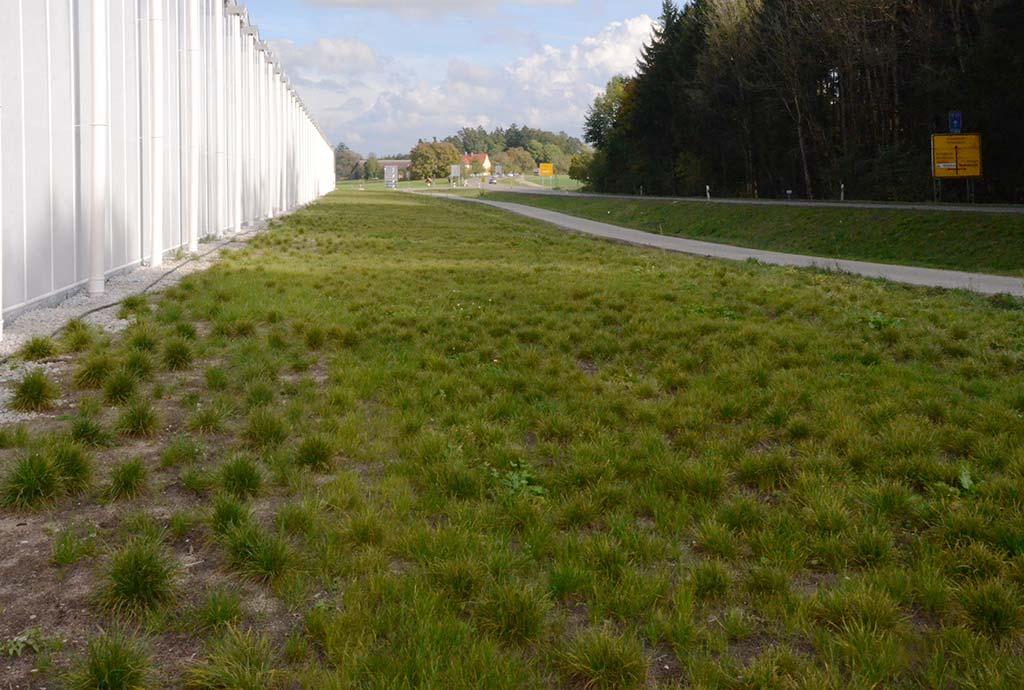 Raseneinsaat neben Gewächshaus. Wie immer und oft: bevor wir kommen, ist schon was falsches gesät. Nur damit es grün ist nach der Baustelle. Das muss aber wieder weg.