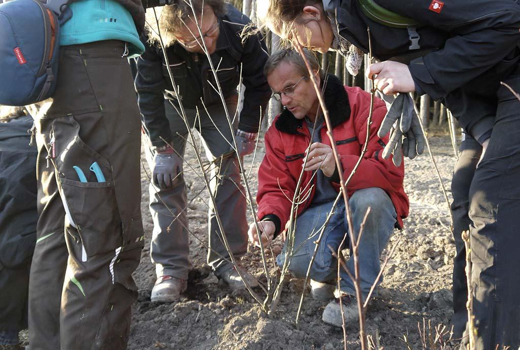 Reinhard Witt zeigt wurzelnackten Strauch. Naturgarten-Profi-Praktikanten bekommen die Basics im Gehölzschnitt