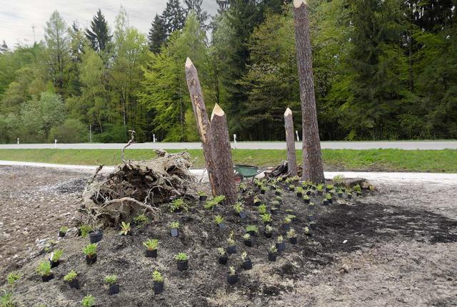 Baumstämme, Wurzelstöcke, modellierte Hügel.  Artenreiche Wildstaudenbepflanzung, dazwischen kommen dann Einzelansaaten