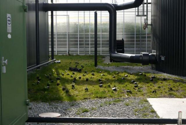 Wildstaudentöpfe liegen auf Rasenfläche. Jeder Quadratmeter zählt. Hier eine Artenanreicherung zwischen Technikbauten