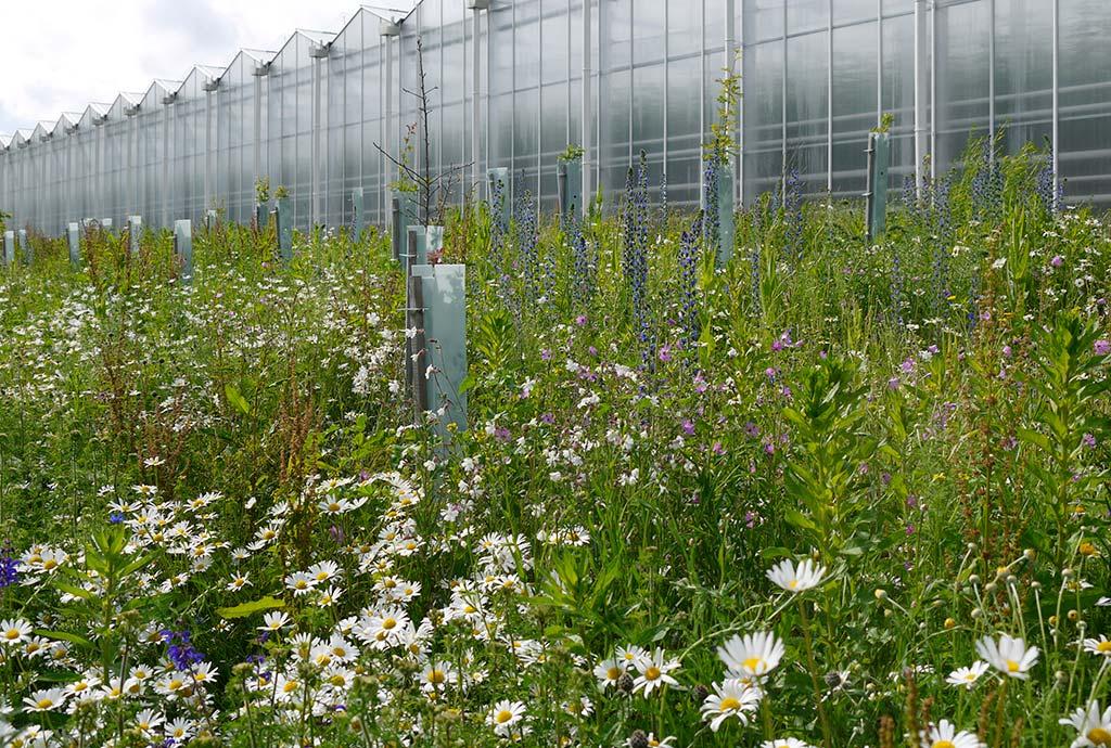 Blumenwiese in voller Pracht. Jedes Jahr wird es schöner. Millionen von Wildblumen
