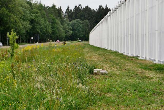 Eine Wiesenhälfte ist schon gemäht. Die Pflege läuft sehr gut: Staffelmahd für höheren Blütenreichtum im Sommer.