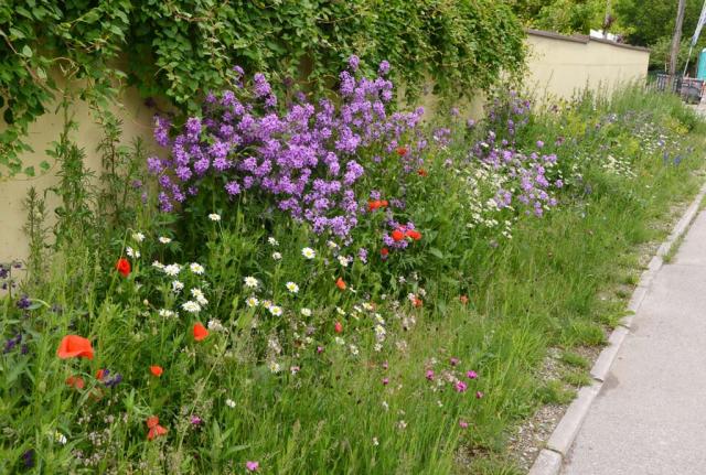 Detailansicht. Direkt am Strassenrand wurde ein niedriger Blumen-Schotter-Rasen mit Karthäusernelken gesät