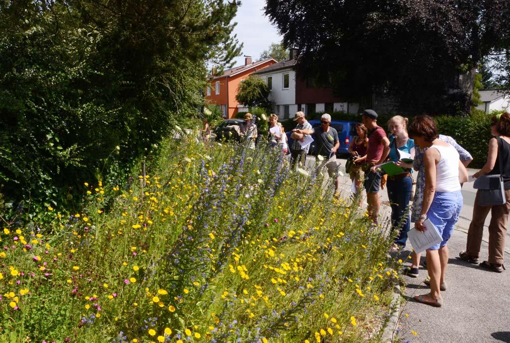Exkursion mit dem Naturgarten-Profi-Kurs. Ein kleines, blumiges Eck mit Färberkamille und Natternkopf