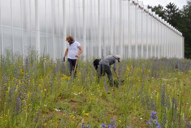 Es fängt an zu blühen. Jätgang mit den Naturgarten-Profis im nächsten Jahr auf der gleichen Fläche