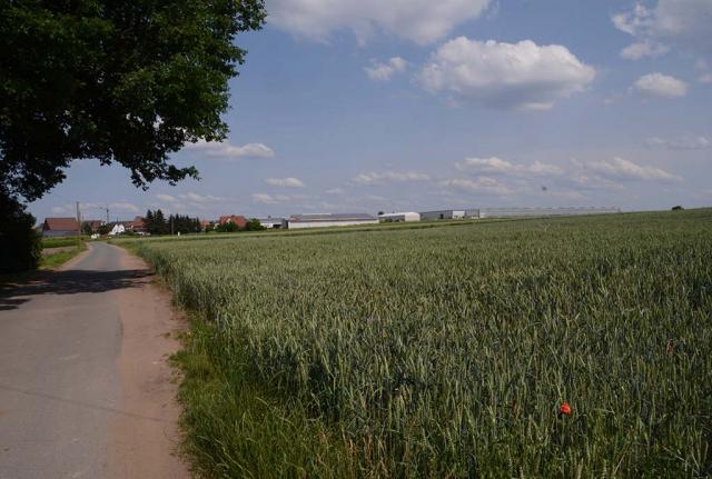 Blick auf großes Weizenfeld im Sommer. Ortstermin vorher: Hier soll demnächst ein neues Gewächshaus hin. In eine seit Jahrhunderten intensiv genutzte bäuerliche Landschaft im Nürnberger Knoblauchsland