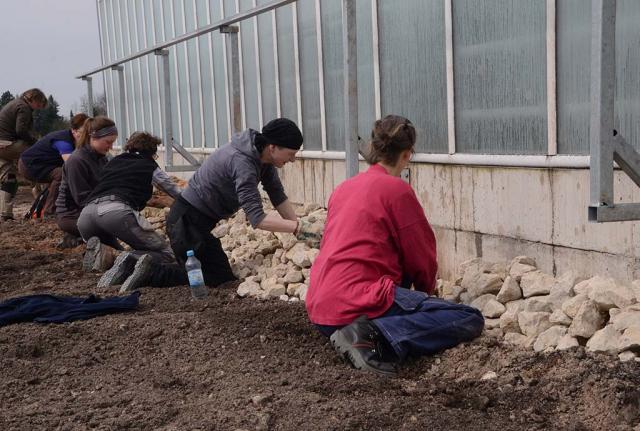 Grobe Steine werden vor einem Gewächshaus aufgeschichtet. Mit Naturgarten-Profi-Praktikanten werden Biotopstrukturen an der Gewächshaussüdseite errichtet