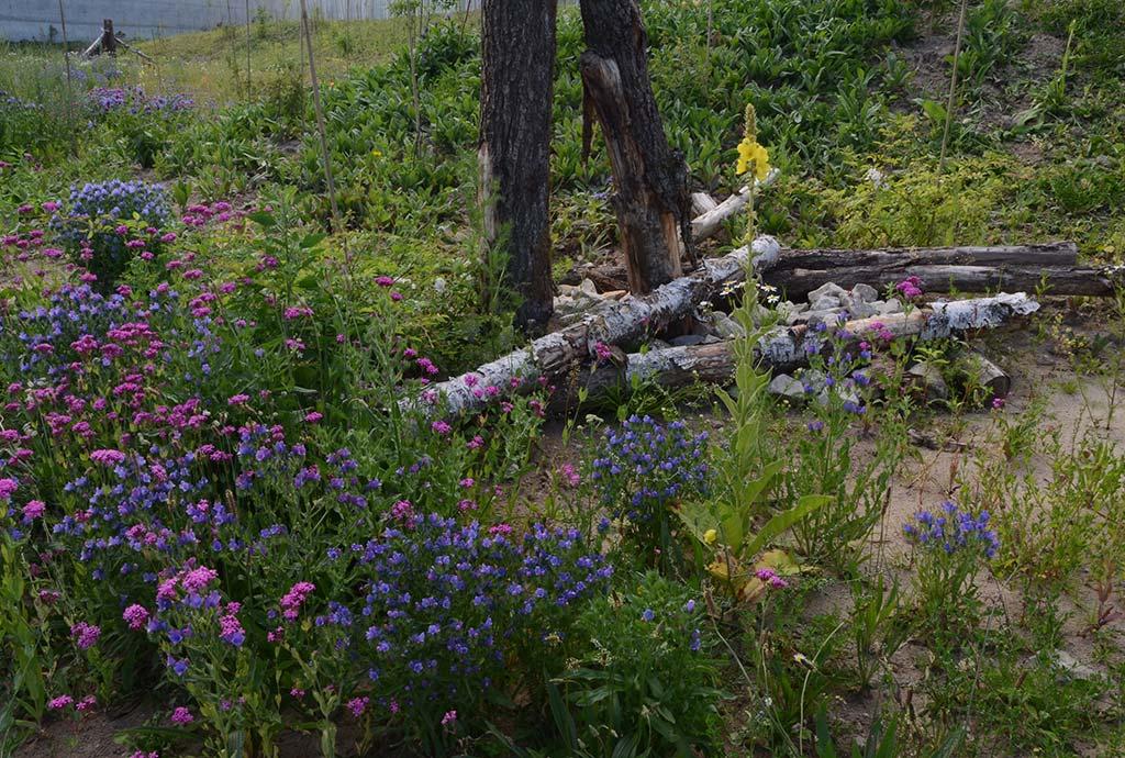 Totholz und Steinhaufen in verschiedenster Form sind ein wichtiger Teil des Biotopmosaikes