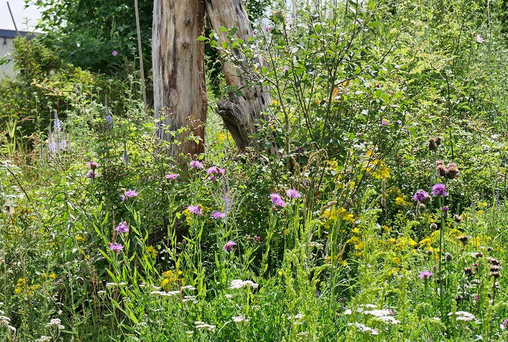 Wildsträucher wachsen im bunten Blumenmeer. Inzwischen kommen auch die Hecken zum Vorschein. Schließlich sind viele der Säume mit artenreichen Wildsträuchern versehen worden