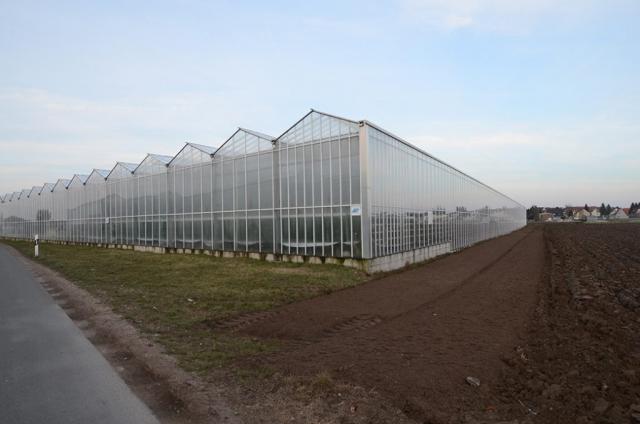 Vorher Grasstreifen undAckerflächen direkt ums Gewächshaus. 2013 ging es bei Höfler Gemüse im Nürnberger Knoblauchsland los, mit den ersten Einsaaten um alte und neue Gewächshäuser