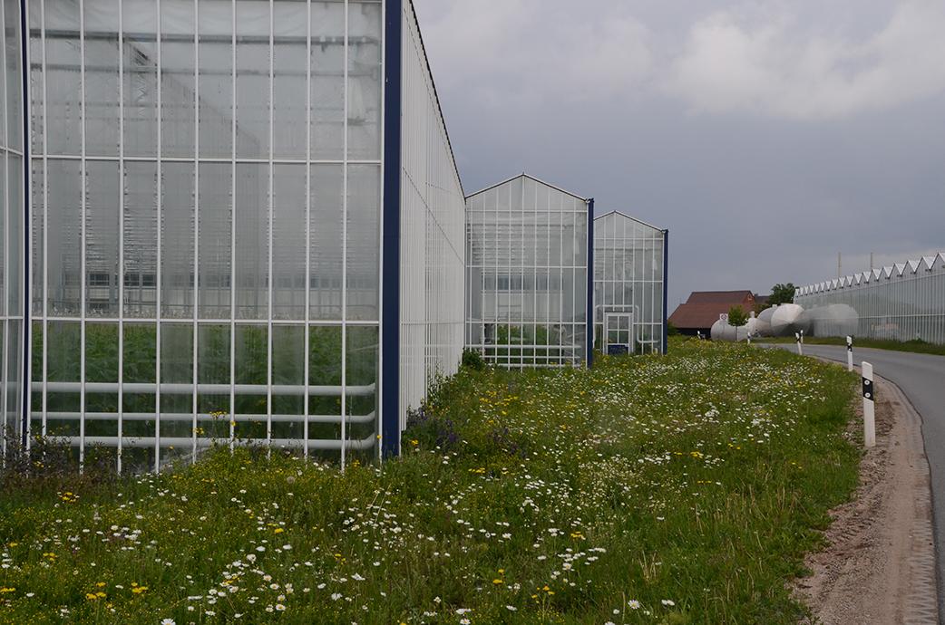 Gewächshaus mit Blumenwiese drumherum. Hier ein Bild aus späterer Zeit noch vor dem Staffelmahdtermin. Alles blumt