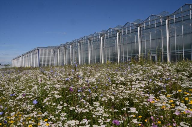 2015 folgten weitere Gewächshäuser mit weiteren naturnahen Flächen drumherum, hier eine große blütenstarke Magerwiese