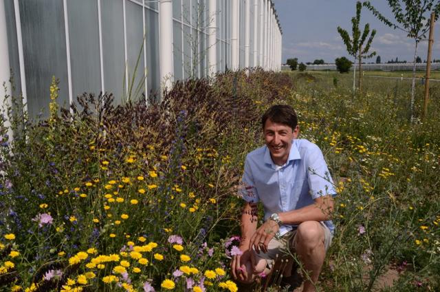 Peter Höfler ist stolz auf seine 1,5 Hektar wilde Blumen. Und er tut auch viel dafür
