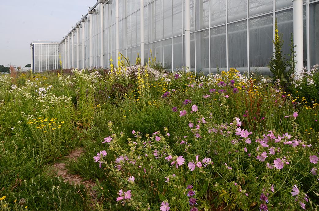 Ein bunter Saum mit verschiedensten Blumen