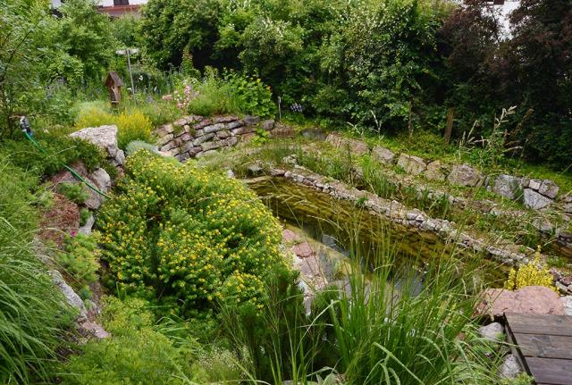 Blick von oben über Mauerterrassen mit Kopfginsterbüschen und Pfeifengrasbüscheln zum Teich hinunter. Naturgarten-Wildnis. Ein sorgsam von uns all die Jahre gepflegter Garten, der trotzdem stellenweise wie ein Stück urige Natur wirkt