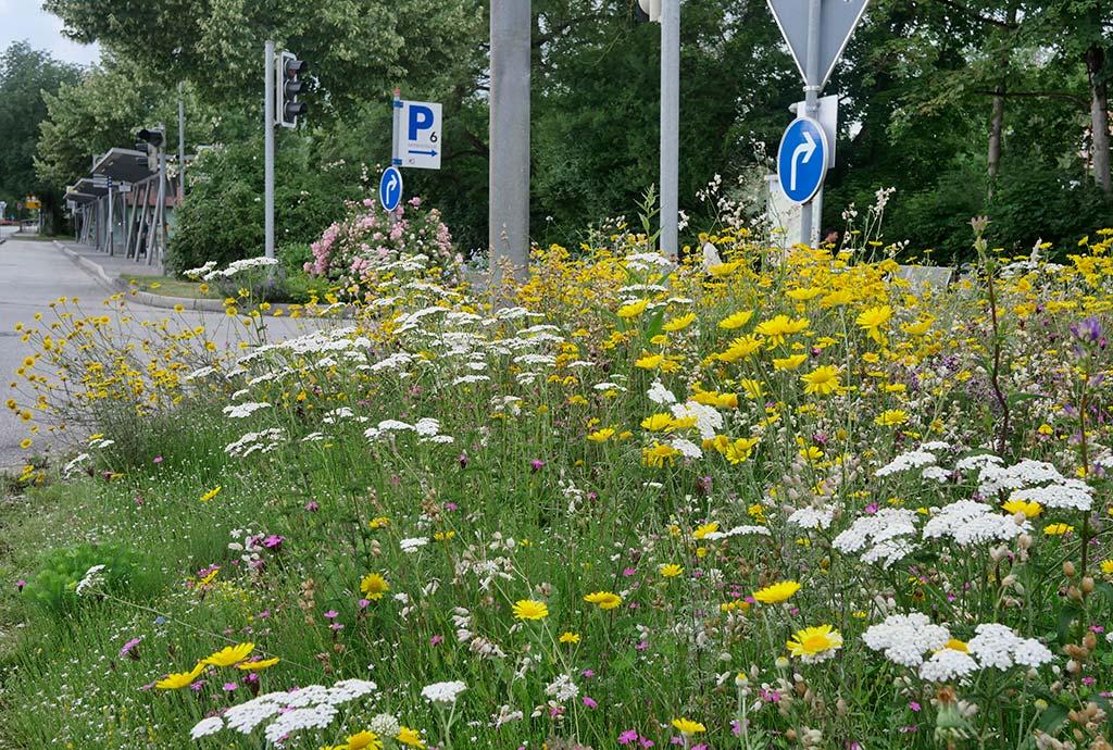 Blühende Verkehrsinsel in Trostberg. Fridolfing war die Pilotgemeinde des Landkreises Traunstein. Auch die anderen Kommunen des Bauhoftrainings haben schöne Bilder angelegt