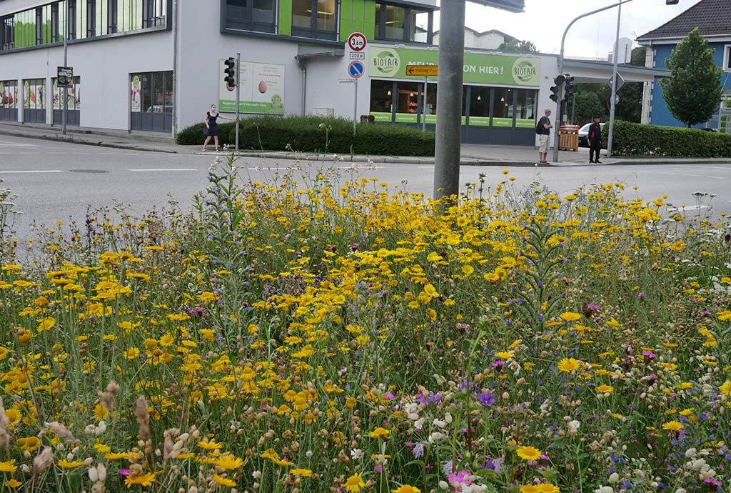 Farbenrauschvon Blüten auf Verkehrsinsel.Trostberg ist die Gemeinde, die auch nach dem Bauhoftraining weitermacht. Immer neue Flächen kommen hinzu