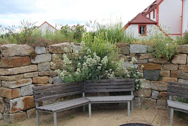 Sitzplatz im Fruehsommer 2020, weiße Spornblumen wachsen aus einer Trockenmauerritze hinter den Sitzbaenken. Foto: A. Welskop