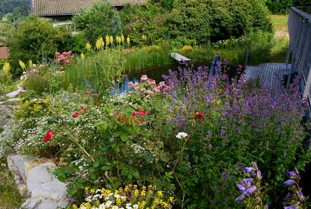 Das Rosen-Duftpflanzenbeet in spaeteren Jahren, es thront ueber dem Schwimmteich.