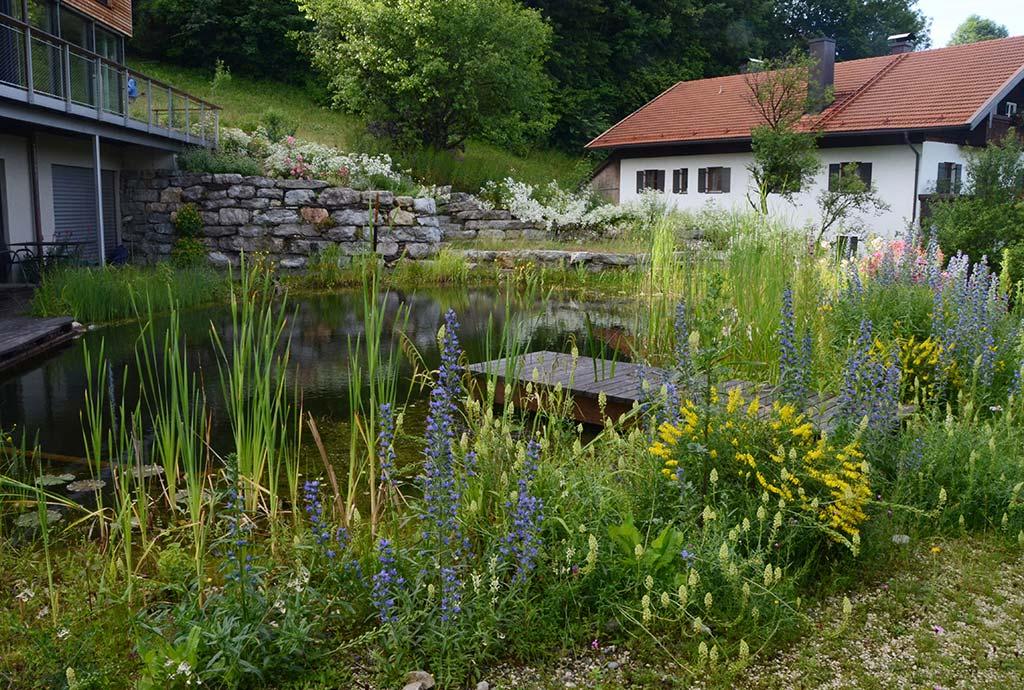 Blick ueber den Schwimmteich auf die große Trockenmauer den Wiesenhang hoch. Der Schwimmteich ist eine unglaubliche Bereicherung des Naturgartens. Auch die ihn umgebenden Beete und Pflanzen.