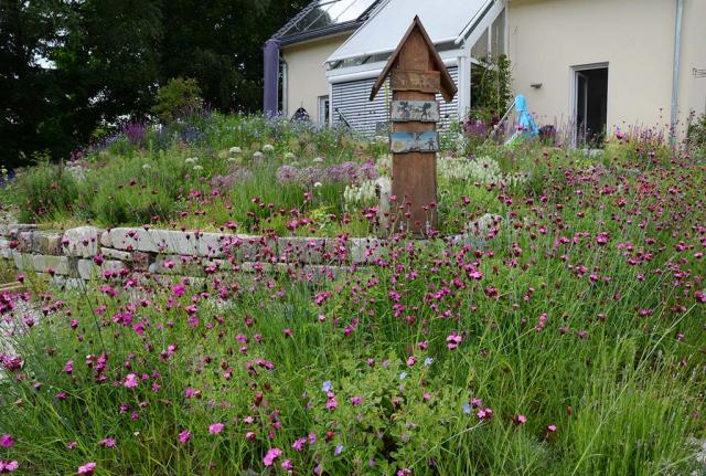 Blick übers Beet, Nelken in rosa dicht an dicht. Anssat von Riesen-Nelken zwischen gepflanzten Stauden im Rosen-Duftpflanzenbeet