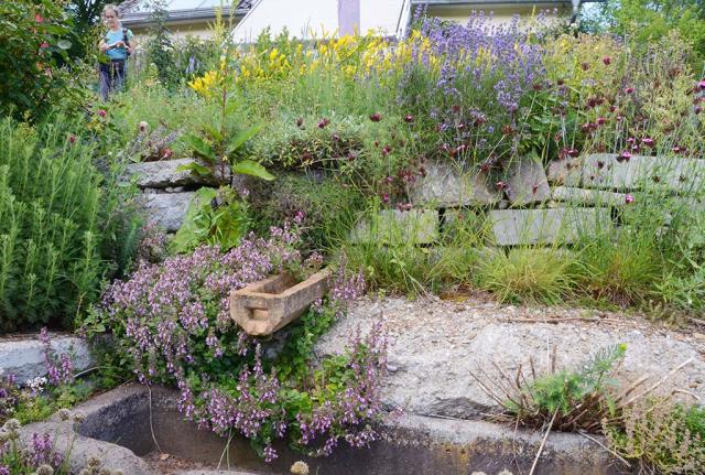 Naturnahe Regenwasser-Nutzung, Baudetail. Aus der Trockenmauer ragt ein historischen Ton-Regenrohr. Es führt das Regenwasser vom Hausdach in einen Trog, der in den Bachlauf überläuft