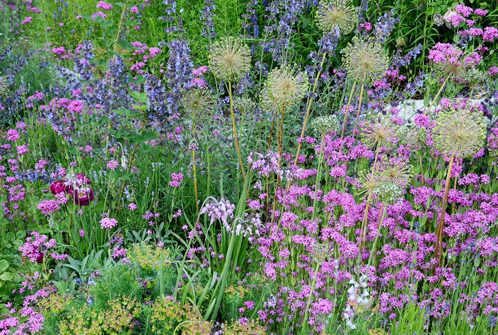 Verschiedene Wildblumenwiebeln, dazwischen Nelken-Leimkraut mit Blauminzen. Erleben von Blüten, Formen und Farben. So schön kann ein Wildblumenbeet im Frühling aussehen