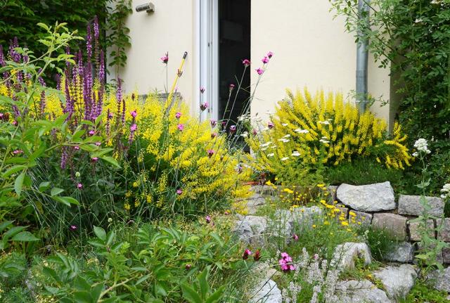 Terassenaufgang aus Natur- und Recyclingsteinen, begleitet von honigsüß duftendem Schwarzen Geißklee, der aber gelb blüht