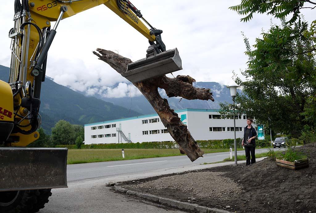 Pill 2016: Grundstückszugang am Wall – vorhandenes Totholz wird eingebaut