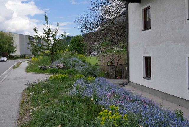 Pill Mai 2017: Staudenbeet vorm Haus & Wall – momentan sind Zweijährige wie Vergissmeinnicht dominant