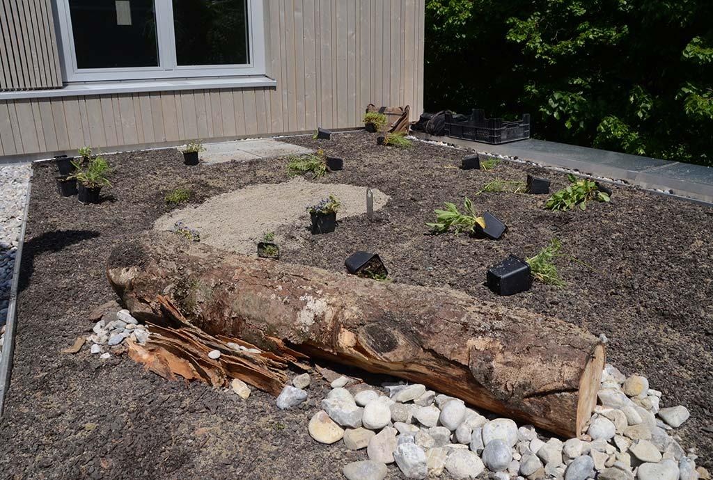 Kleine Dachfläche mit Pflanzen, Baumstämmen, Steinhaufen, Sandfläche und ausgelegten Wildstauden. Mit besonderer Begeisterung entwickeln wir am Prinz-Eugen-Park das Konzept des Biopdiversitätsdachs weiter. Hier müssen wir noch sehr viel für die Zukunft lernen