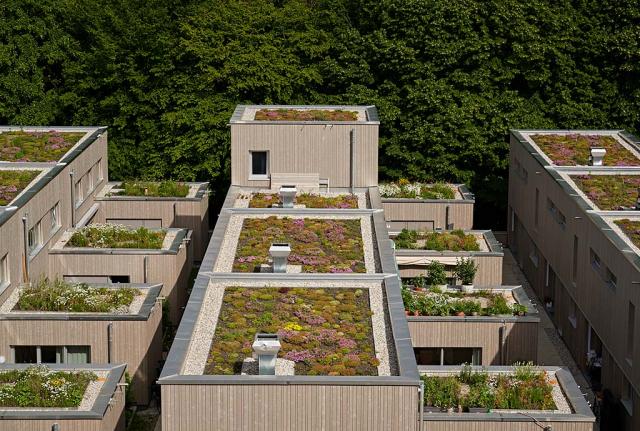 Auch lassen sich Aufschlüsse über die Auswirkung der Sustrathöhe machen. Die unteren Dächer haben höhere Substrate als die oberen. Das zeigt auch die Bewuchshöhe