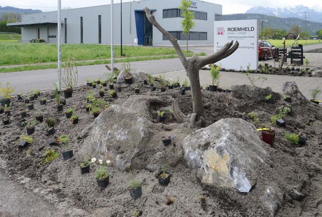 Staudentöpfchen liegen zum Bepflanzen herum. So sieht unsere Idee von einem Firmeneingangsbeet aus. Ein strukturreiches Wildblumenbeet mit viel Sand, Findlingen und Schwemmholz vom Rhein.