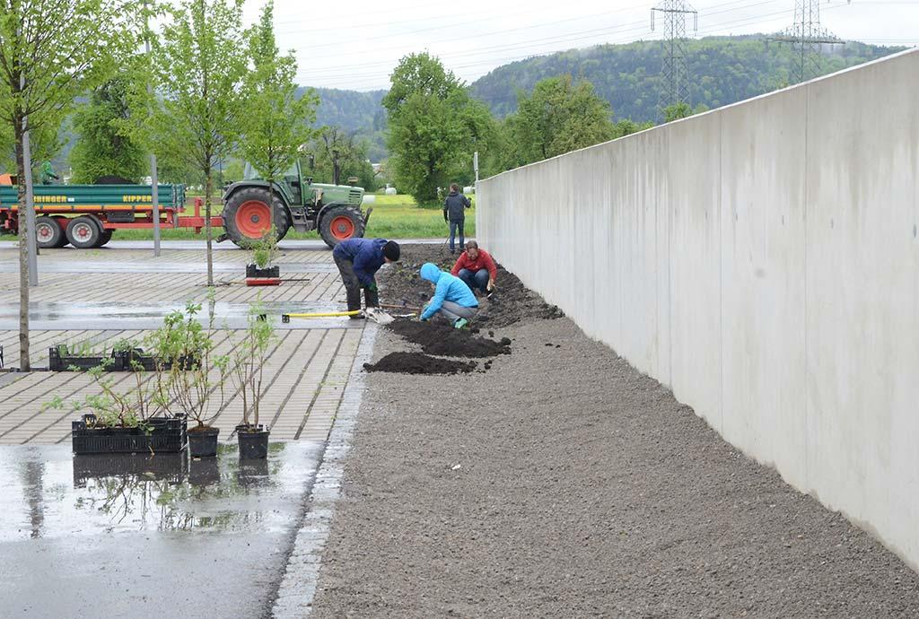 Pflanzaktion im Entwässerungsgraben. Das nachen wir neu, besser, artenreicher und viel schöner. Passenderweise bei Regen.