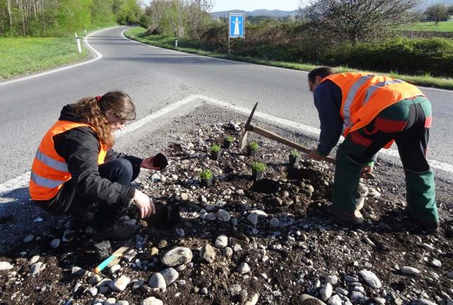 Praktikanten des Naturgarten-Profi-Lehrgangs bei der Arbeit. Im groben Kies, der mit Kompost vermischt ist, liegen einige hemische Wildstaudentöpfe. Pflanzung von Initialstauden auf dem Einfahrtsdreieck der Autobahnzufahrt.
