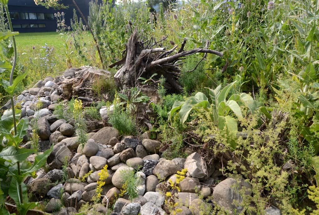 Ein bereits leicht überwachsener Steinhaufen und ein Wurzelstock sind zu sehen. Steinhaufen und Totholz gehören zur naturnahen Anlage automatisch dazu, wichtige Strukturen für die Tierwelt.