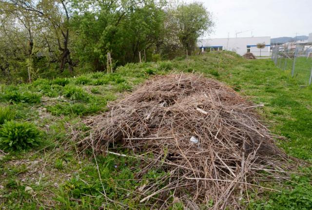 Ein Haufen mit trockenen Stengeln liegt am Rand der Böschung, die schon wieder grün wird. Pflegeschnitt. Die erst nach dem Winter abgeschnittenen trockenen Stengel bleiben noch einige Wochen liegen, damit alle darin überwinterten Tiere sich noch retten können.
